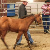 Astronomy_and_horse_sale_016