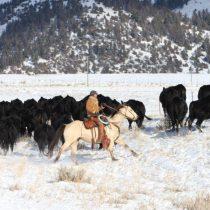 Cowboy_snow