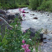 Riverflowers