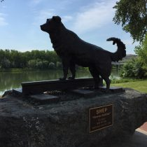 Statue of Shep on Fort Benton's river levee