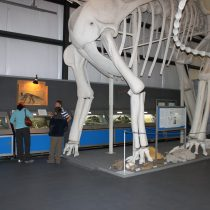 Inside Two Medicine Dinosaur Center in Bynum