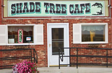 Shade Tree, Denton