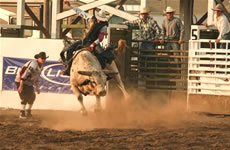 Marias River Stampede Rodeo