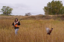 Pheasant Hunting in Central Montana
